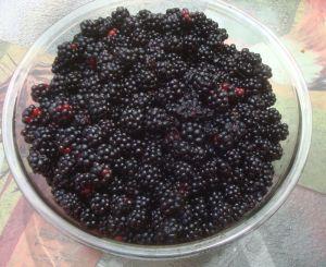 berries5