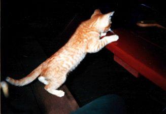 Robin Kitten 11- 2000
